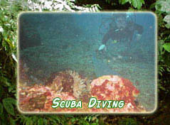 Scuba Diving of the Costa Rican Coast